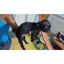 Cachorros Pug Machos $3500 A Tratar, Mes Y 20 Dias Negros