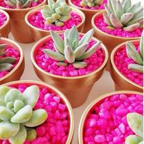 100 Plantas Suculentas Mini Para Recuerdo. Maceta Cobriza