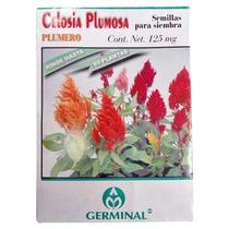 Semilla Para Siembra Celosia Plumosa