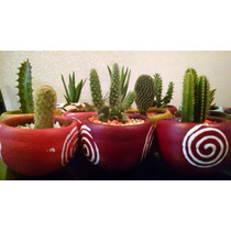 Cactus Y Suculentas Miniatura Decorados En Maceta