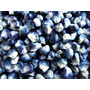 Maiz Azul 20 Semillas Hortaliza Jardín Sdqro