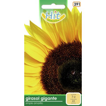 1 Sobre De Semilla Flor Girasol Gigante,simple Amarillo