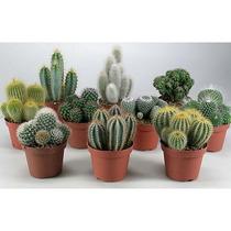 50 Semillas Cactus Mix Suculentas Jardines Hobby Jardineria