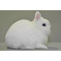 Conejos Énanos Muy Bonitos