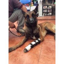 Ferula Para Perro Carpos Protesis Soporte Pata Chico