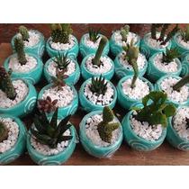 Cactus Y Suculentas Decoradas En Maceta Ventas De Mayoreo