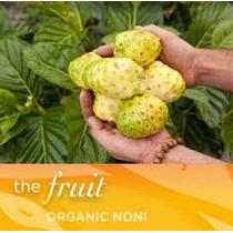 Noni Organico Morinda Citrifolia - Paquete De 5 Frutos