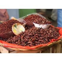 Chapulines Oaxaqueños