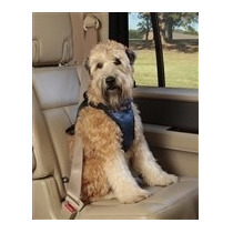 Pechera De Seguridad Para Auto Solvit Mediana Paseo Perro