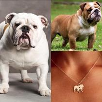 Collar De Perro Bulldog