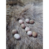 Amuleto Piedra De Coyote
