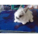 Preciosos Conejos Cabeza De Leon
