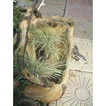 Jardinera Con Asas Tipo Tronco (concreto)
