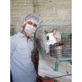 Conejos: Paquete Granja Familiar