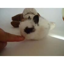 Conejos Enanos De Angora 18 Cm.