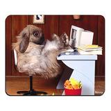 Divertido Conejo Lindo Animal Juego Del Ratón Conejito Perso