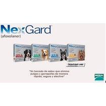 Nexgard Anti Pulgas Y Garrapatas Coatza Mediano