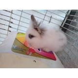Conejos Cabeza De Leon Bebes