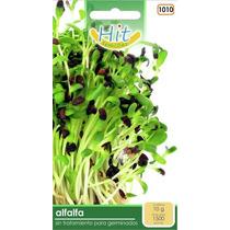 1 Sobre De Semilla De Alfalfa Sin Tratamiento Para Germinar