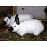 Conejos Californianos Y Varios