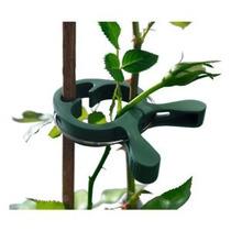 Videos De Plantas Conjunto De 15