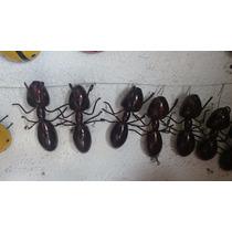 Hormigas De Metal Herreria Para Decoracion
