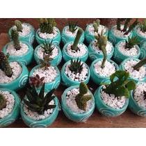 Recuerdos Con Macetas Cactus Y Suculentas