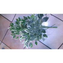 Ficus Artificial Hawaino