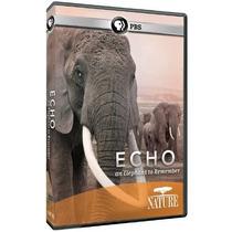 Eco: Un Elefante Para Recordar