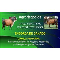 Inicia Negocio Toros Proyecto Productivo Corrida Financier