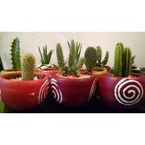 Cactus Y Suculentas Decoradas En Maceta Al Mayoreo.