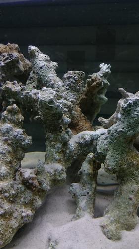 Roca curada fiji branch kg acuario marino 170 y3bbb for Acuario marino precio