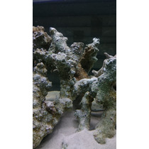 Roca Curada Fiji Branch Kg Acuario Marino