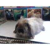 Conejos Fuzzi Lop De Remate!!!