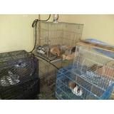 Conejos Raza Cabeza De Leon, Belier, Rex, Nva Zelanda Y Loop