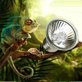 Foco Emisor Calor 75w Exoterra Anfibio Reptiles Uva + Uvb
