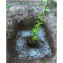 Hidrogel Para Agricultura 15kg