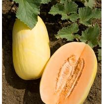 40 Semillas Melon Crenshaw Casaba Cucumis Melo Jardin Huerto