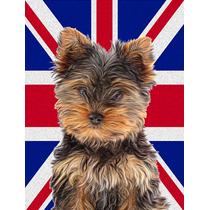 Yorkie / Yorkshire Terrier Con Inglés Union Jack Británica