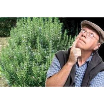 1 Kg Hojas De Romero Primera Calidad Garantia Botanica