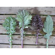 Semillas Kale Col Rizada Lacinato La Moda Verde Brassica Y +