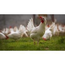 Aves Gallos con los mejores precios del Mexico en la web