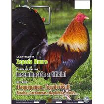 Revistas De Gallos Pie De Cria Son Usadas