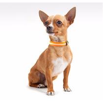 Collar Led Para Perro Chihuahua