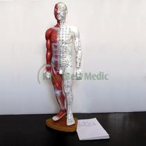 Modelo Medico Varon Puntos Acupuntura En Ingles...