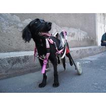 Andadera Silla De Ruedas Carrito Para Perro Carretilla