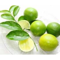 Limon Persa