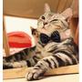 Collar Para Gato Perro Moño Negro Mascota Corbata Corbatin