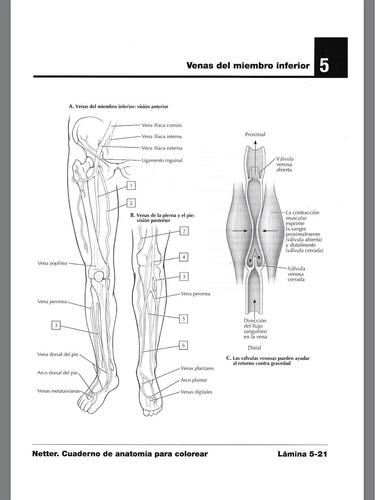 best Netter Cuaderno De Anatomia Para Colorear Pdf Descargar Gratis ...