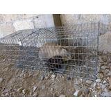 Trampa Para Gatos O Animales Medianos